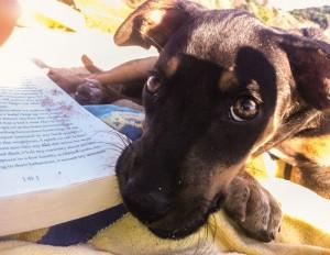 Rou-Reading